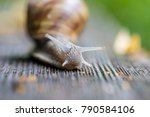 forest snail on wooden bench  | Shutterstock . vector #790584106