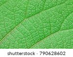 green leaves for background | Shutterstock . vector #790628602