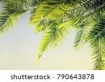 beautiful toned sunlight palm... | Shutterstock . vector #790643878