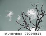 dry tree on sky background...   Shutterstock . vector #790645696