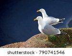 Stock Photo Two Seagulls...