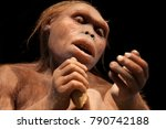 An Australopithecus  One Of Ou...
