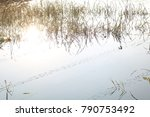tree reflection at lake | Shutterstock . vector #790753492