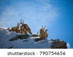 zermatt  switzerland   may 13 ...   Shutterstock . vector #790754656