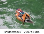 mandarin duck in the lake | Shutterstock . vector #790756186