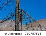 Fence And Telephone Pole...