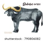 hand painted realistic african... | Shutterstock . vector #790806082