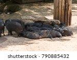 visiting jerusalem biblical zoo ... | Shutterstock . vector #790885432