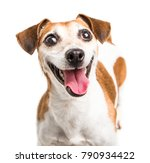 Stock photo cheerful smiling happy dog jack russell terrier muzzle small cute pet on white background 790934422