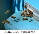 bees with a nectar and a pollen ... | Shutterstock . vector #790947796