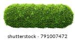 longl green fresh ornamental... | Shutterstock . vector #791007472