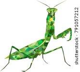 low poly mantis  praying mantis ... | Shutterstock .eps vector #791057212