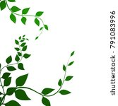 background with green leaves    ... | Shutterstock . vector #791083996
