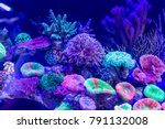 clownfish as known as... | Shutterstock . vector #791132008