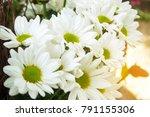 chrysanthemum morifolium ... | Shutterstock . vector #791155306