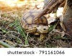 baby african spurred tortoise... | Shutterstock . vector #791161066