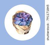 watercolor succulent. hand...   Shutterstock . vector #791171845