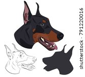 Doberman Dog Portrait ...
