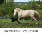 animal friendship warm blooded... | Shutterstock . vector #791324188