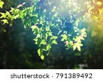 leave on tree with green blur... | Shutterstock . vector #791389492