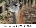 portrait close up of cute... | Shutterstock . vector #791417806