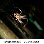 spider on the web in the pantry | Shutterstock . vector #791466055