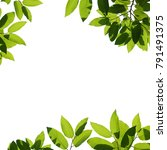 tree branch frame isolated | Shutterstock . vector #791491375