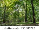 bungaku no mori park... | Shutterstock . vector #791506222