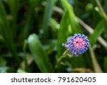 abstract view of a wild blue... | Shutterstock . vector #791620405