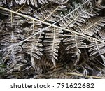 Frosted Brown Fern Leaves