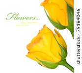 Yellow roses on the white with copy space - stock photo