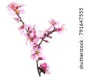 season of flowering almonds ...