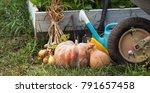 rich harvest in the garden of... | Shutterstock . vector #791657458