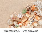 exotic shells and corals in the ...   Shutterstock . vector #791686732