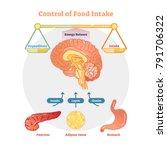 food intake control vector... | Shutterstock .eps vector #791706322