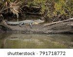 4 5 Ft American Alligator ...