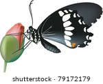 butterfly in the rose bud | Shutterstock .eps vector #79172179