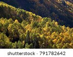 Mountainside View Of Gold And...