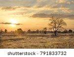farmer's rice fields in the... | Shutterstock . vector #791833732