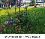 lampang city  thailand. ... | Shutterstock . vector #791850016