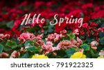 numerous bright flowers of... | Shutterstock . vector #791922325