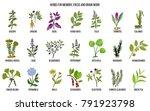best medicinal herbs for memory ... | Shutterstock .eps vector #791923798