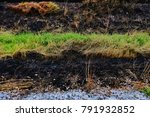 Small photo of Some grass grasses survive from burning.