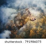 photo collage  head of the wolf ... | Shutterstock . vector #791986075