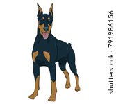 Doberman Dog Standing Isolated...