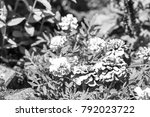 beautiful black and white... | Shutterstock . vector #792023722