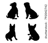 Stock photo french bulldog purebred dog standing in side view silhouette isolated 792042742