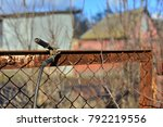 welder makes a fence in the... | Shutterstock . vector #792219556