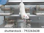 researcher anesthetized an...   Shutterstock . vector #792263638