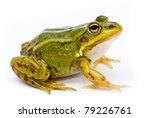 Rana Esculenta. Green  Europea...